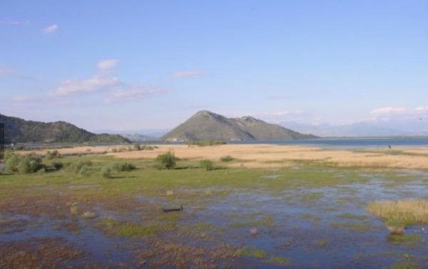 J°009 – Skadarsko jezero /le lac Skadar (Albanie – Monténégro)
